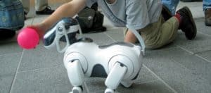 Cães e gatos robóticos serão os animais de estimação do futuro?